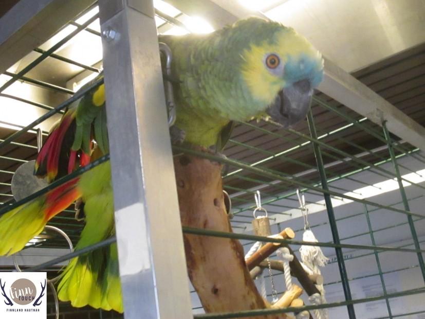 Tseki, der sprechende Papagei, ist das Maskottchen der Kirche und begrüßt die Besucher gut gelaunt im Eingangsbereich.
