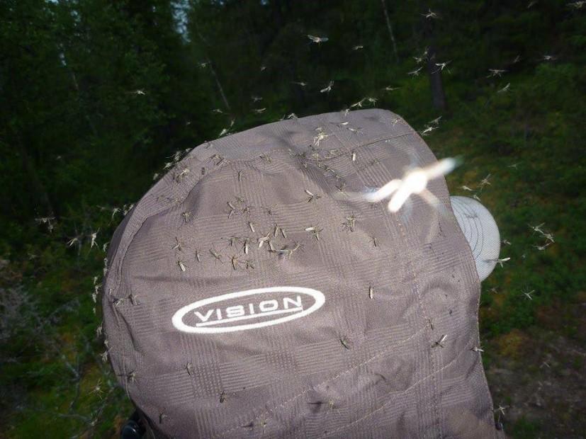 Mückenschwärme sind in Finnisch-Lappland leider keine Seltenheit.
