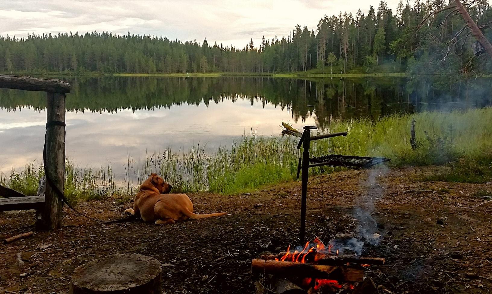 Die wunderschöne finnische Natur am Ylimmäinen Pirinjärvi, Taivalkoski.