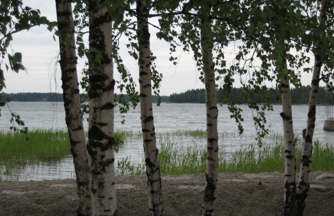 finnland_birken_meer