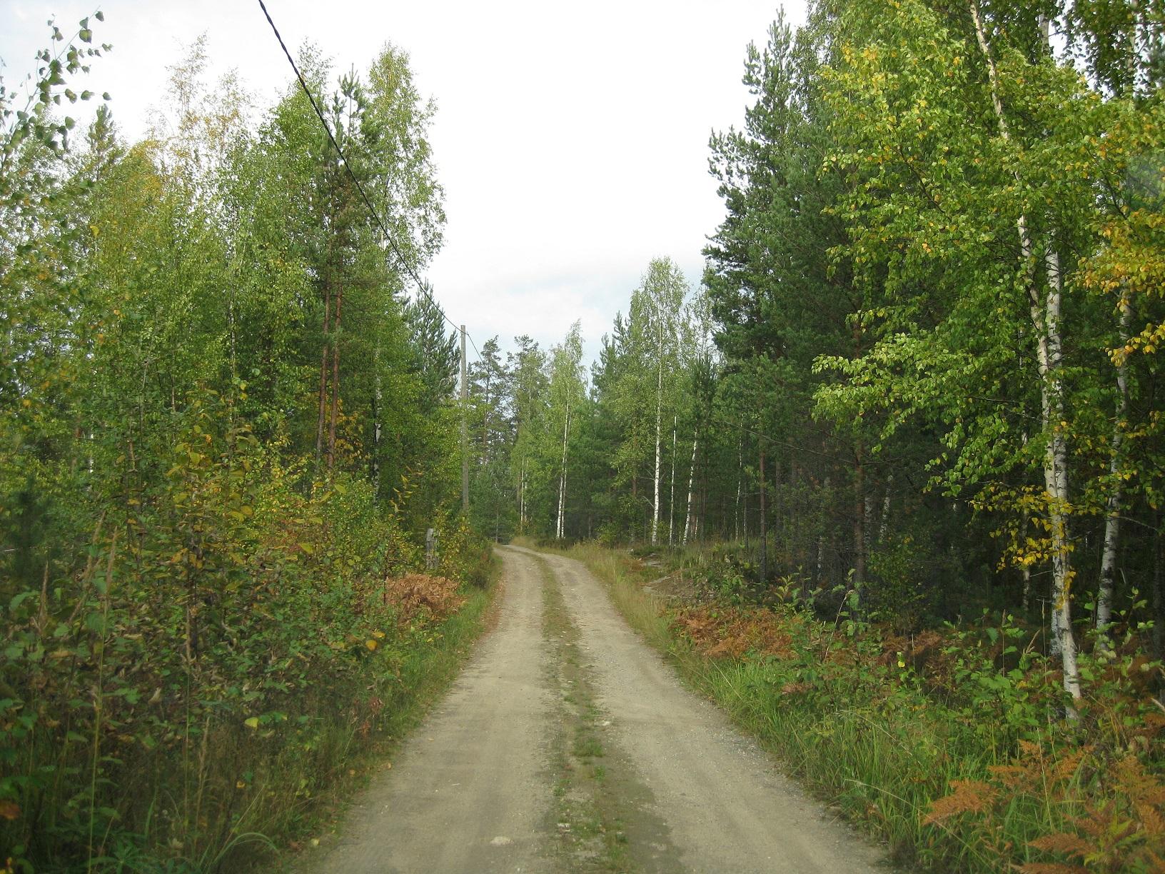 Vorfreude auf Finnland auf dem Waldweg