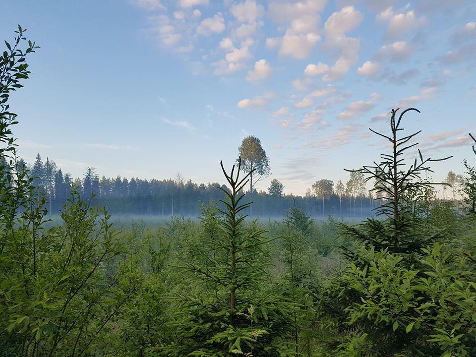 Finnland Urlaub - im Morgengrauen