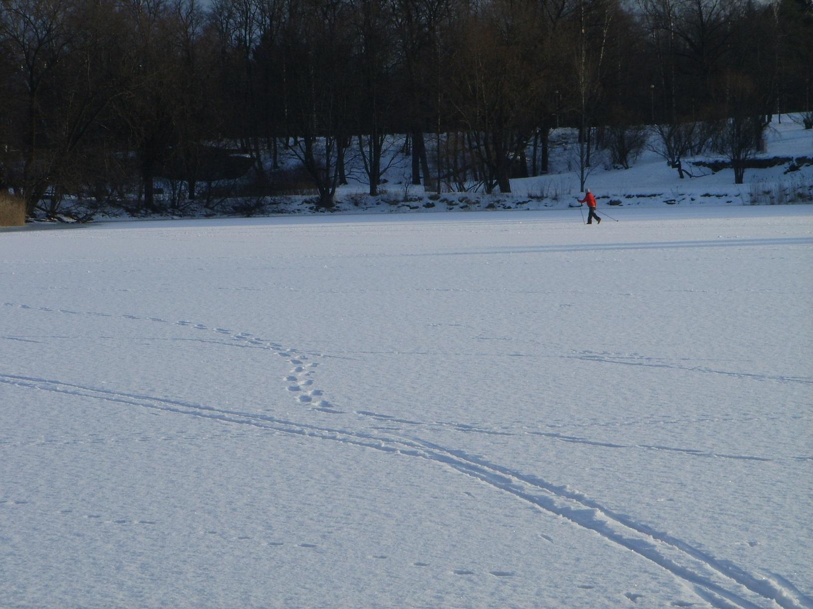 Skilanglauf auf der zugefrorenen Hietalahti