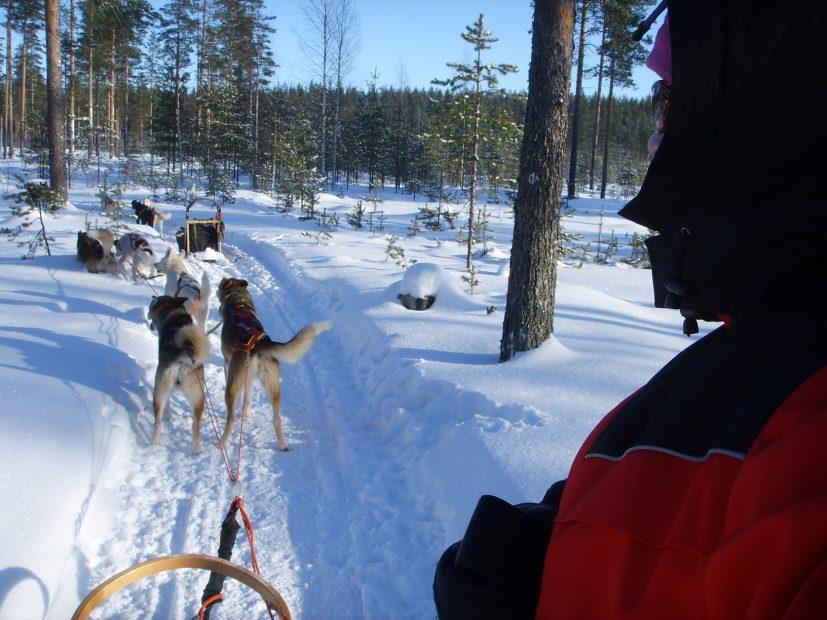 Huskyschlittentour in Finnland