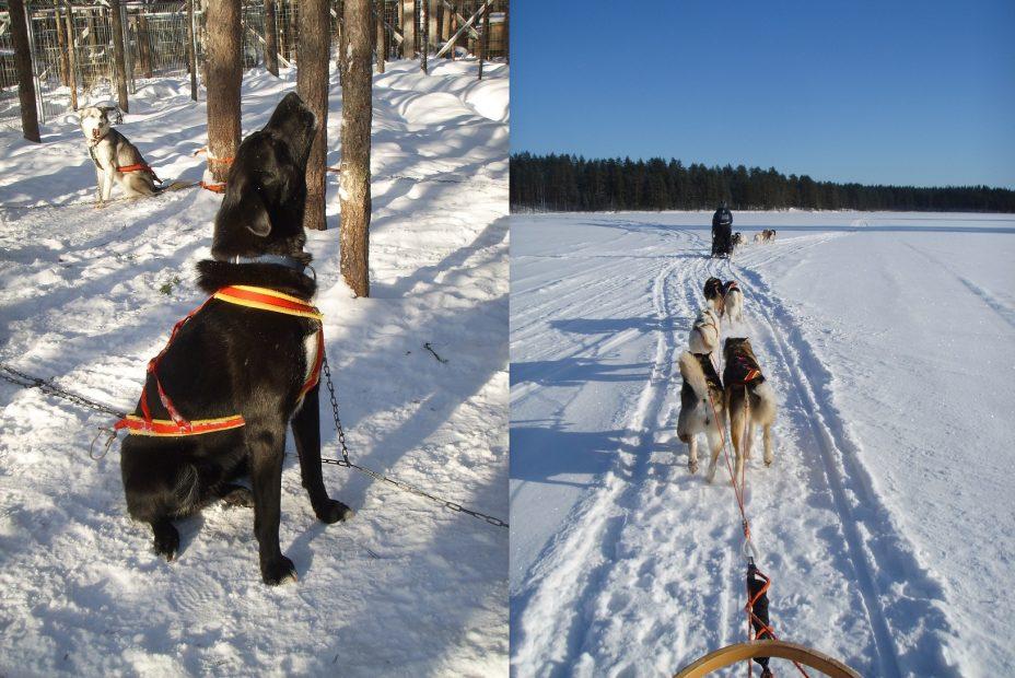 Mit dem Huskyschlitten Finnland erleben