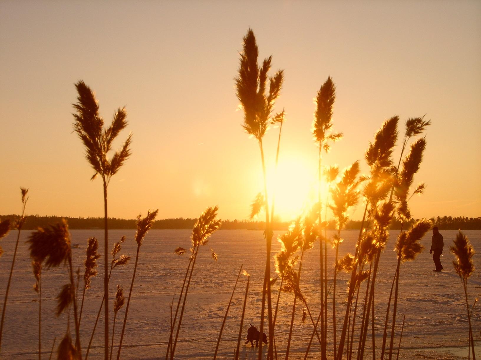 Die Sonne geht unter bei der Insel Seurasaari