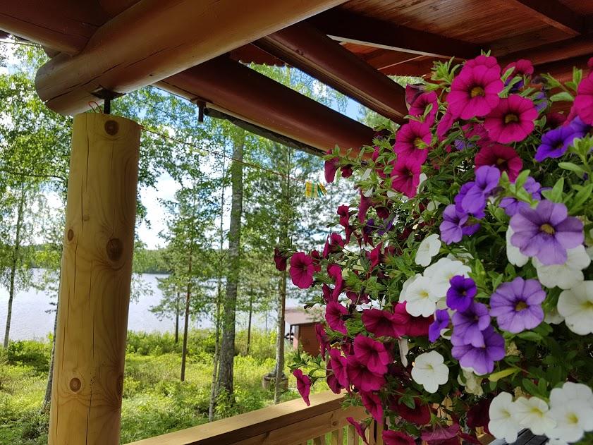 Bunte Sommerblumen an einem Mökki