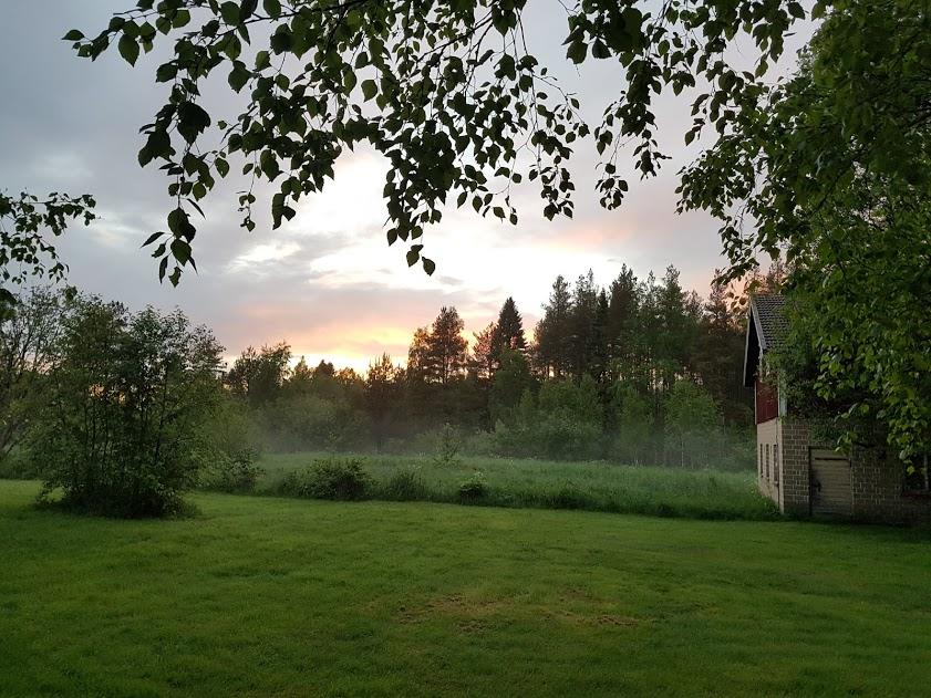 Nebel steigt über Wiesen auf