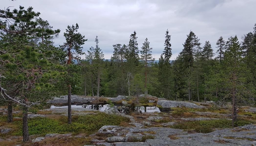 Finnischer Wald