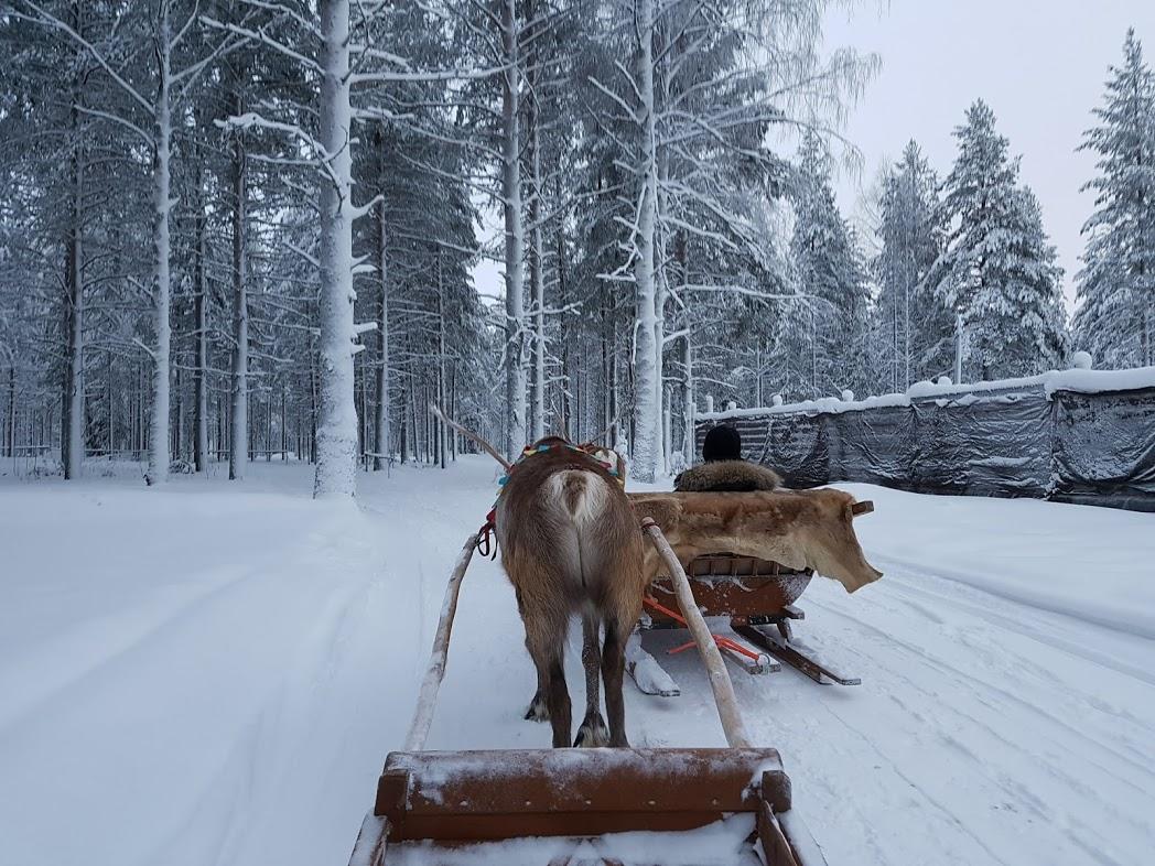 Rentierschlitten in Finnisch-Lappland