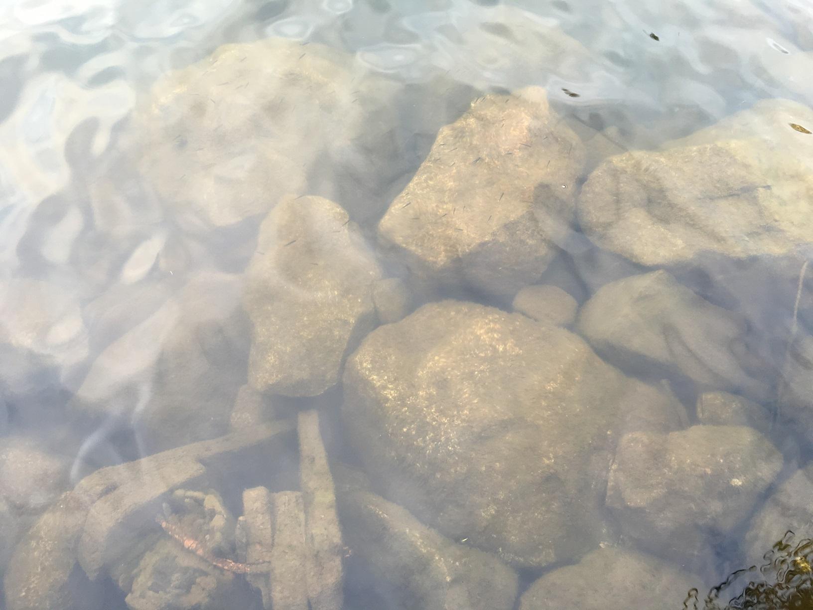 Glasklares Wasser des Puruvesi-Sees