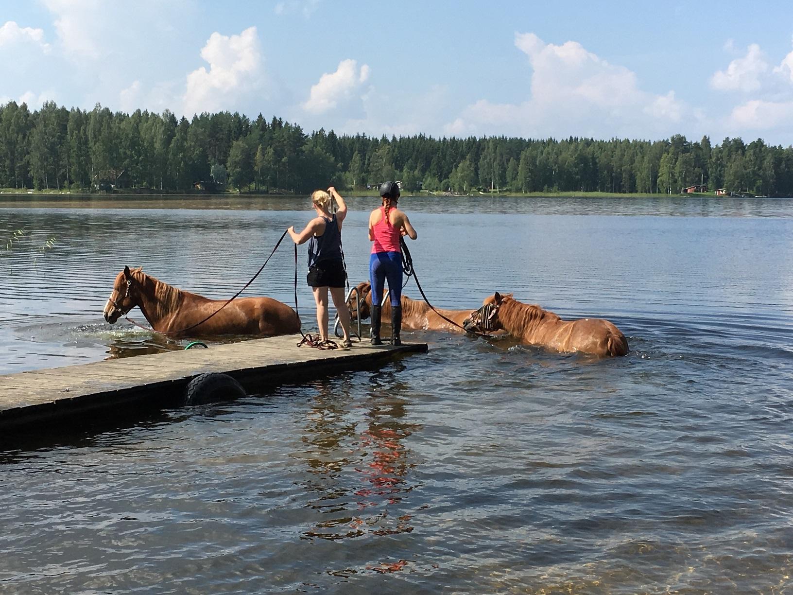 Pferde am Puruvesi