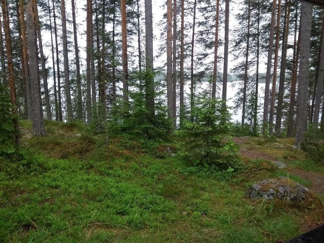Finnischer Wald nach Regen