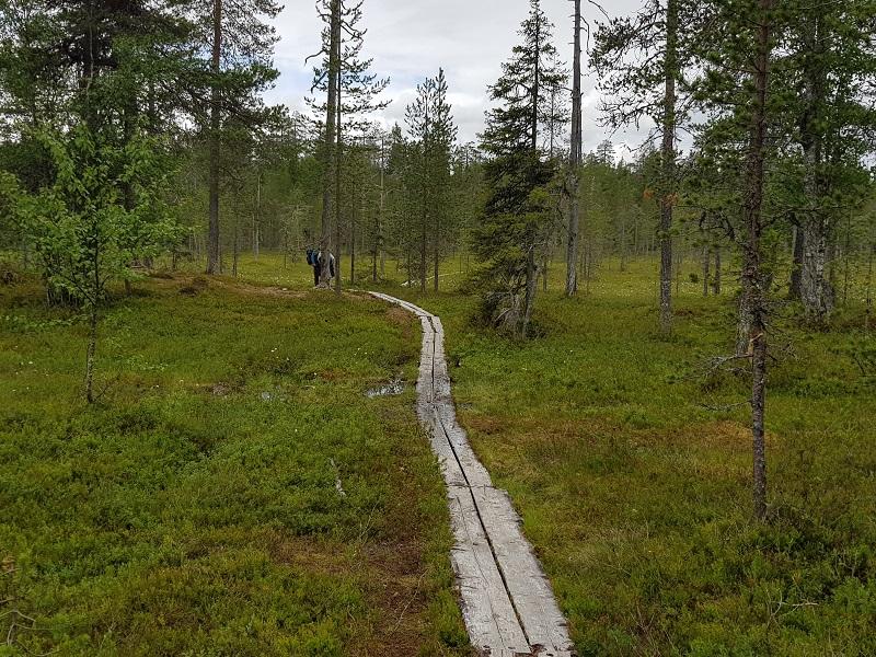 Holzstege durch Sumpf