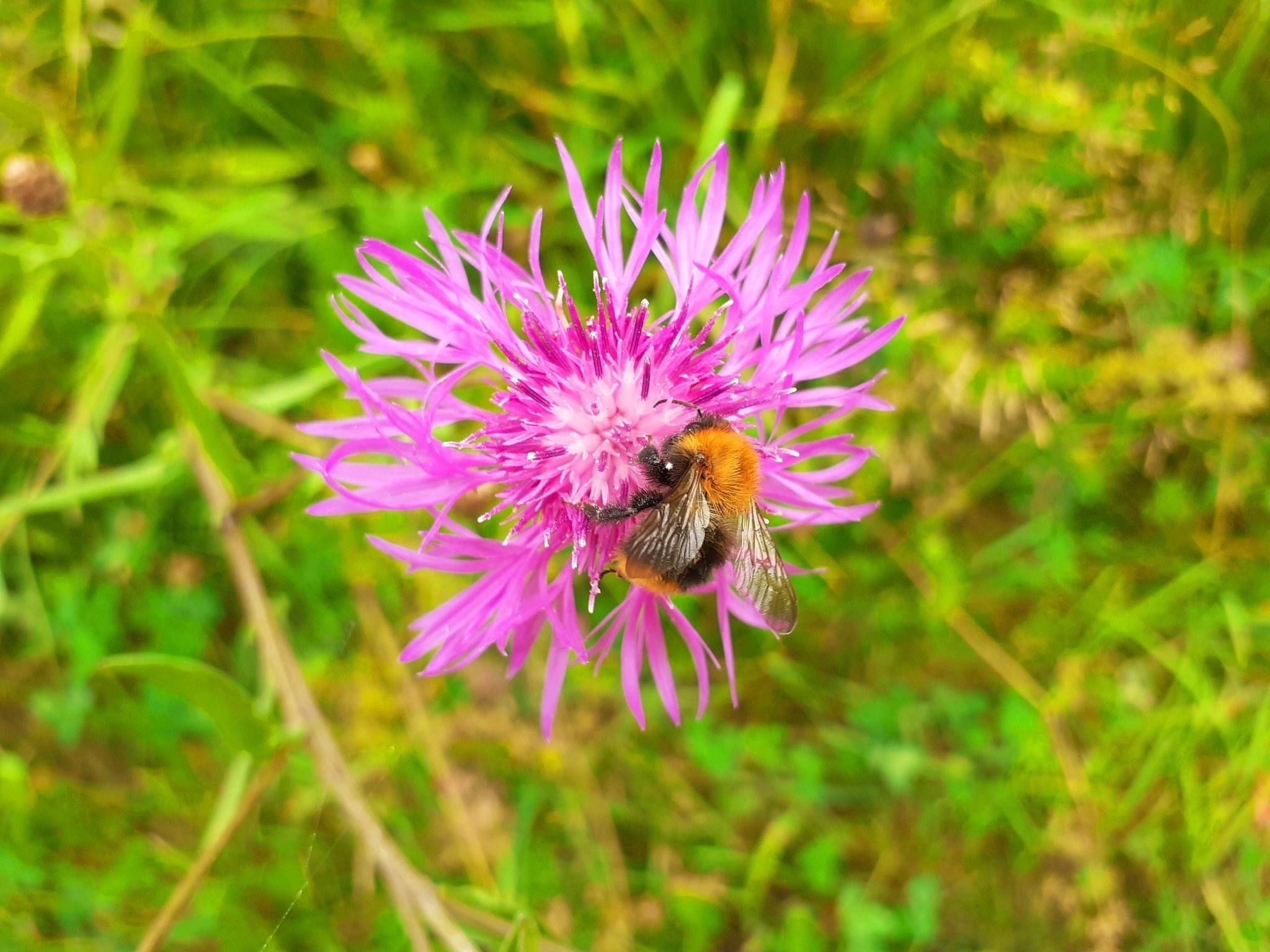 Flora und Fauna auf Vallisaari