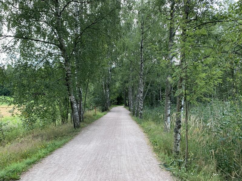 Birkenwald in Helsinki