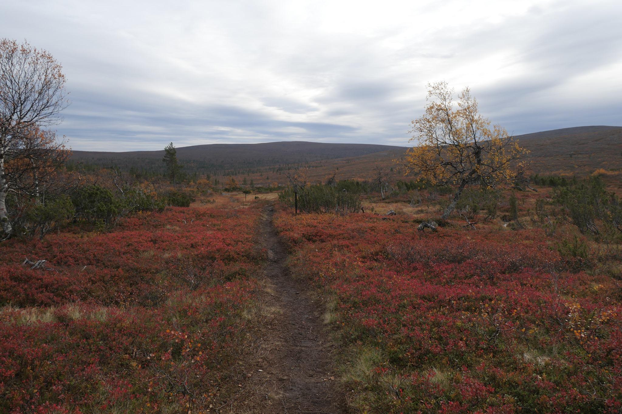 Urho-Kekkonen-Nationalpark in Finnisch-Lappland