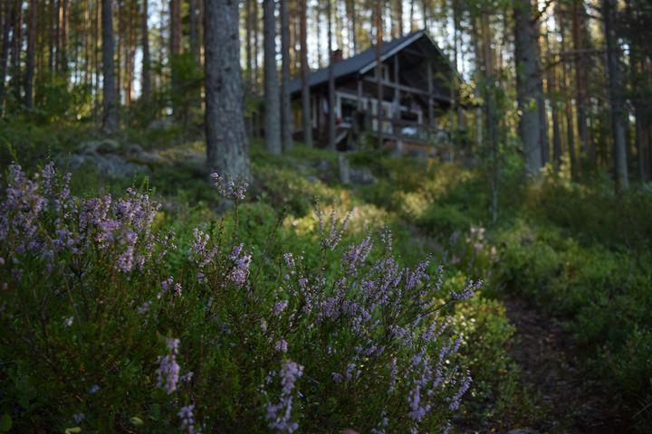 Sommermorgen im finnischen Wald