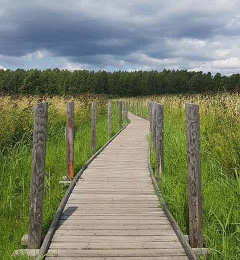 Naturpfad in Helsinki (Lammassaari)