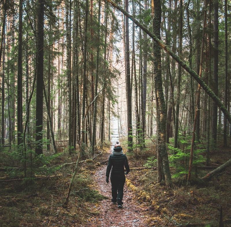Wald im Saimaa-Seengebiet